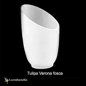 Tulipa Manga Verona de Vidro