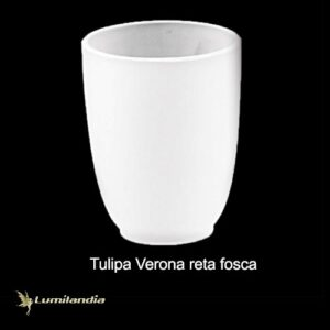 Tulipa Manga Verona Reta de Vidro